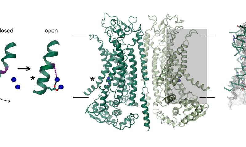 Protein structure could unlock new treatments for cystic fibrosis