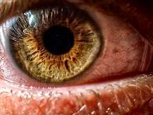 Pupillary response signals uncertainty during decision-making