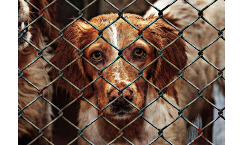Puppy-farmed dogs show worse behaviour, suffer ill health and die young – so adopt, don't shop