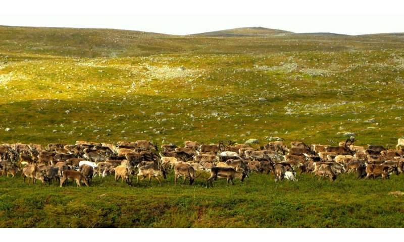 Reindeer grazing protects tundra plant diversity in a warming climate