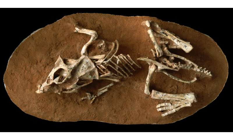 Research on dinosaur embryos reveals that eggs took 3 to 6 months to hatch