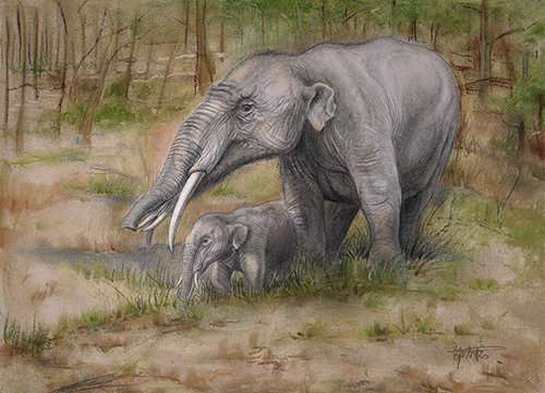 Research on Gomphotherium