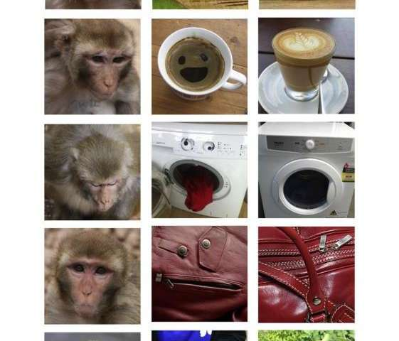 Rhesus monkeys found to see faces in inanimate objects too