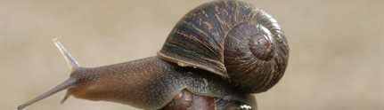 RIP Jeremy the lefty garden snail