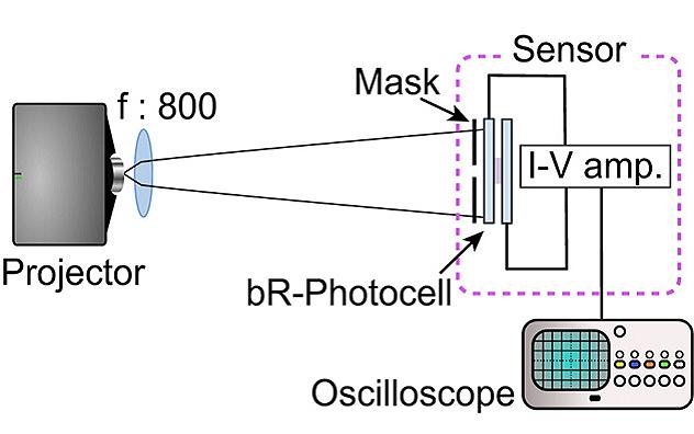 Robotic vision sensors based on light sensitive bacterial proteins