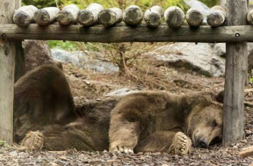 Russian forestry officials said 86 bears had to be shot dead because they were hostile