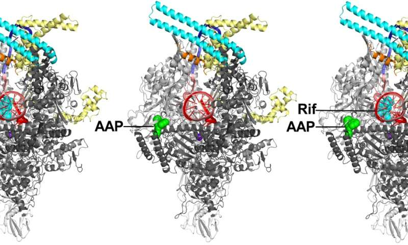 Rutgers researchers determine structure of tuberculosis drug target
