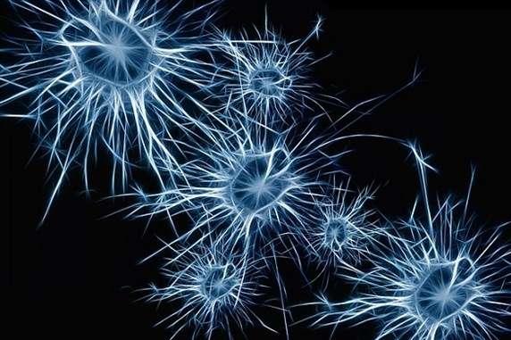 Scientists grow human ''mini brains''