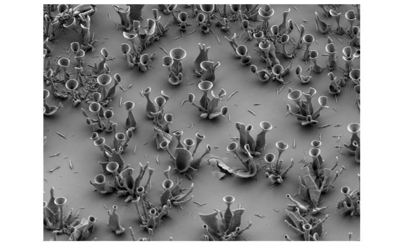 Sculpting optical microstructures with slight changes in chemistry