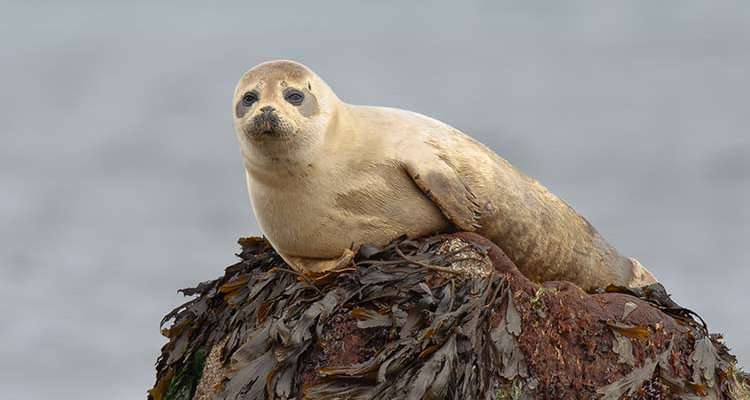 Seals and our shores