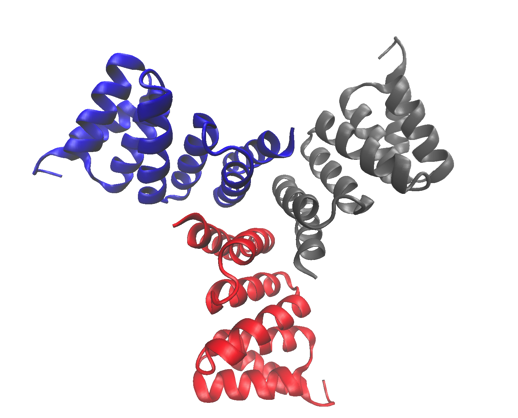 Self-assembling cyclic protein homo-oligomers