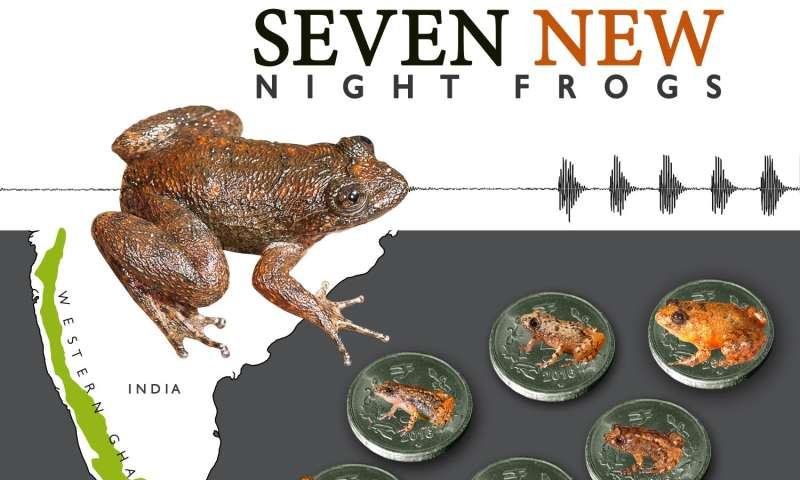 Seven new species of night frogs from India including 4 miniature forms