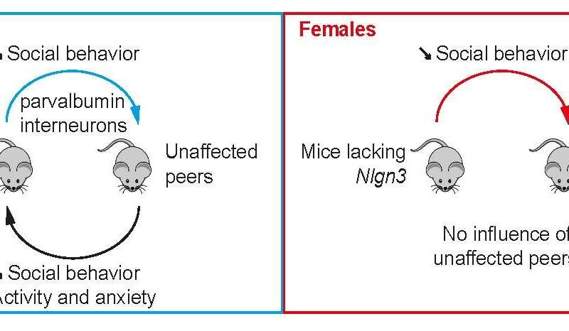Shared housing, shared behavior in mouse model of autism