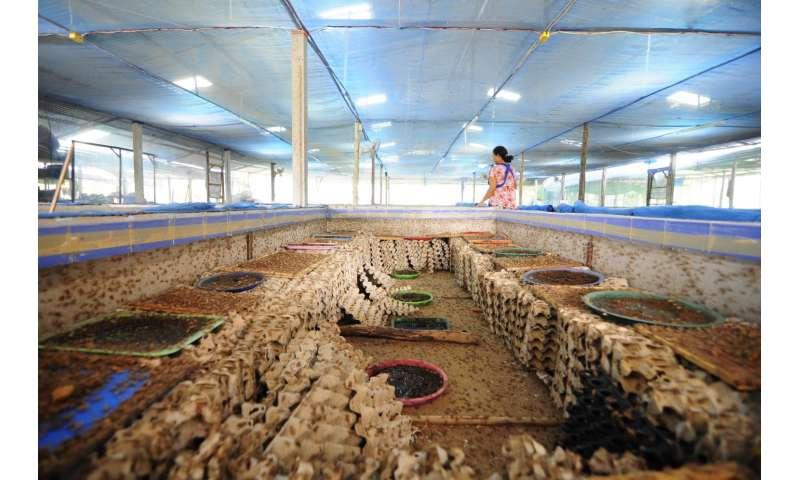 Six-legged livestock -- sustainable food production