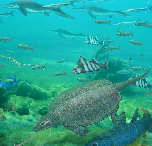 La taille n'est pas importante pour les poissons dans la plus grande extinction massive de tous les temps