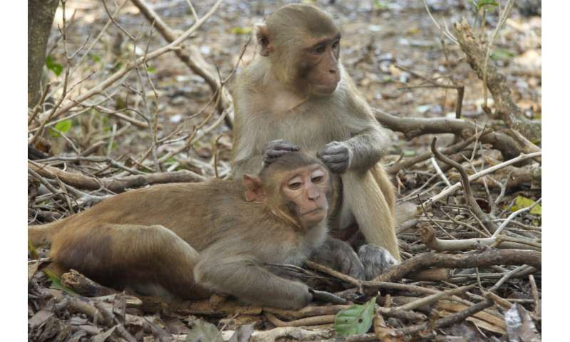 Some monkeys prone to isolation
