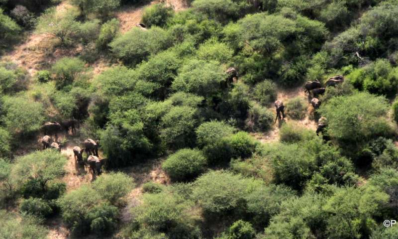 South Sudan wildlife surviving civil war, but poaching and trafficking threats increase