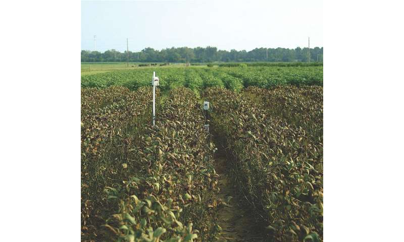 Soybean rust develops 'rolling' epidemics as spores travel north