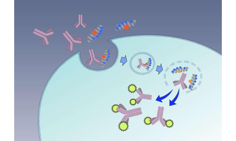 Special delivery: Macromolecules via spider's 'bite'