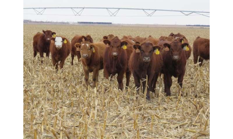 Steering towards grazing fields
