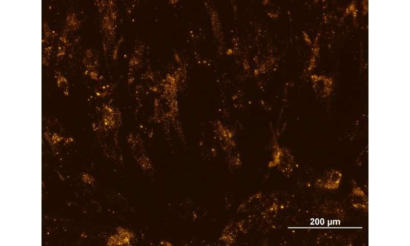 Stem cells seem speedier in space