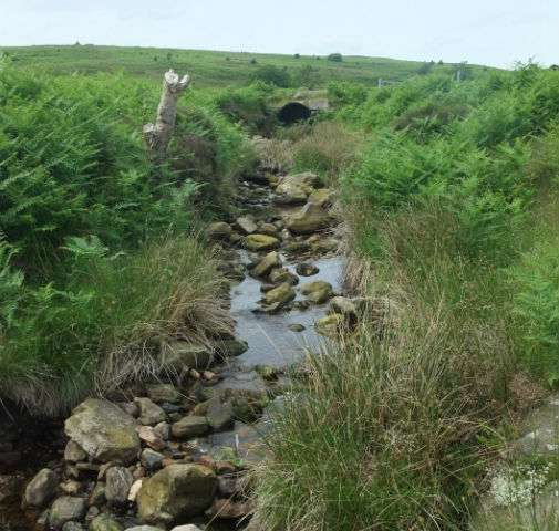 Stream bugs suggest pollution recovery in North York Moors