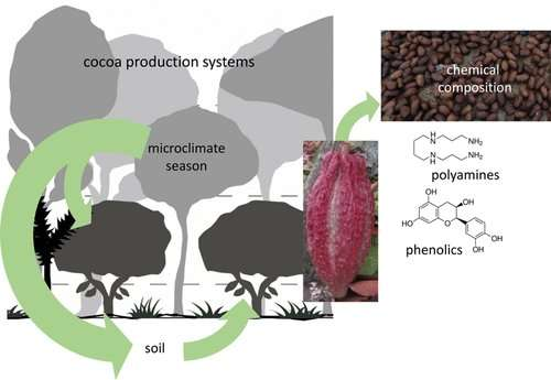 'Stressed out' cocoa trees could produce more flavorful chocolate