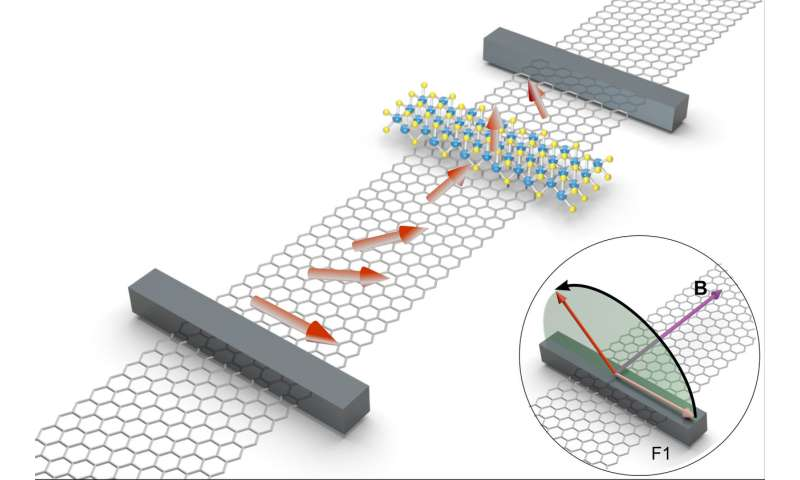 Strongly anisotropic spin relaxation observed in graphene