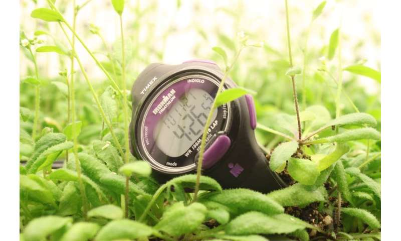 Studying circadian rhythms in plants and their pathogens might lead to precision medicine for people