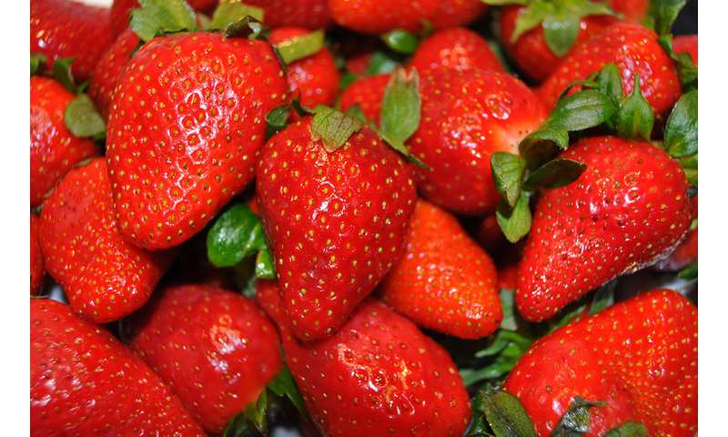 Study on mice demonstrates the action of strawberries against breast cancer