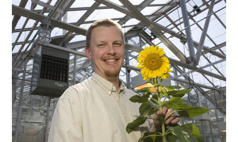 Sunflower genome sequence to provide roadmap for more resilient crops
