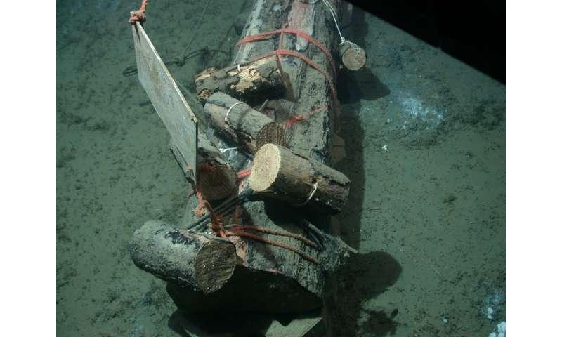 Sunken logs serve as habitats in the deep sea