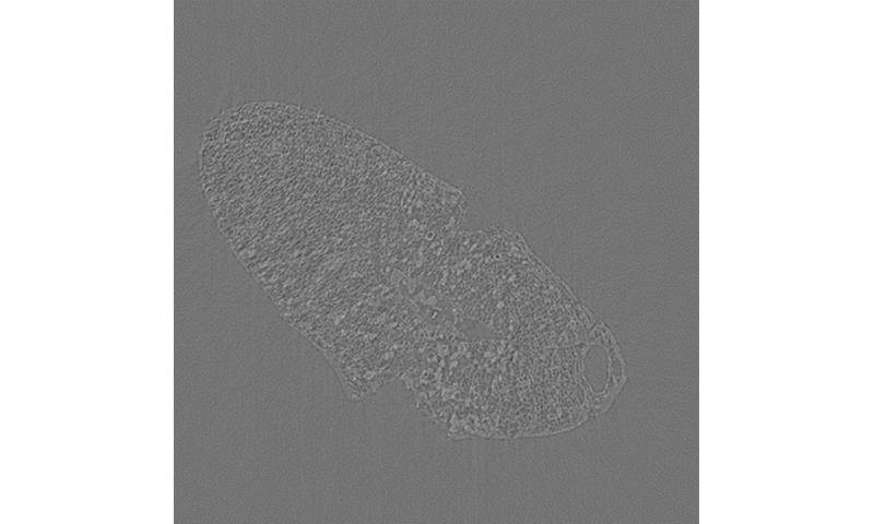 La lumière synchrotron utilisée pour montrer la domestication humaine des graines de 2000 av. J.-C.