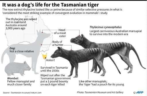 Tasmanian tigers