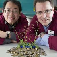 Teaching plants to be better spenders