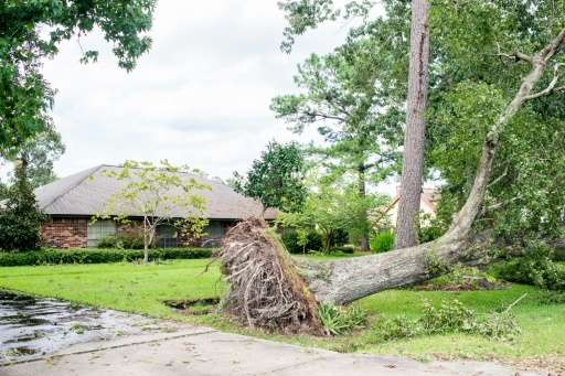 The aftermath of monster storm Harvey is seen everywhere in Orange, Texas as huge uprooted trees lay across yards and roadways a