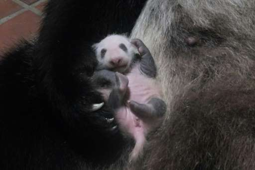 The birth of a panda at a Tokyo zoo last month—the first in five years—sparked panda fever in the capital