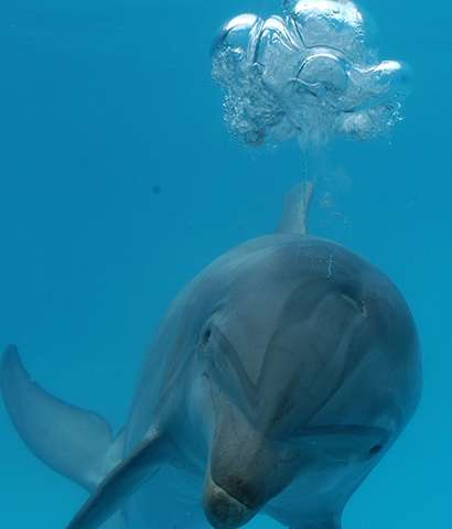 The energetic cost of swimming at high speed when startled may be a factor in strandings of dolphins and whales