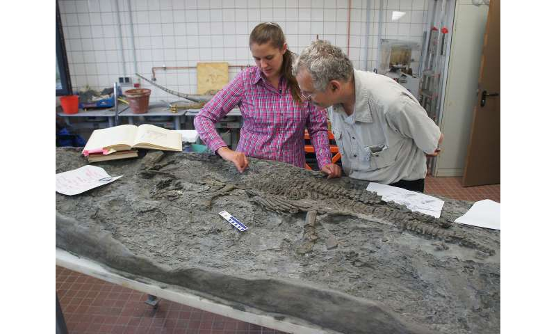 The oldest plesiosaur was a strong swimmer