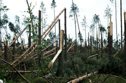 The storms in Poland snapped whole swathes of forest like matchsticks