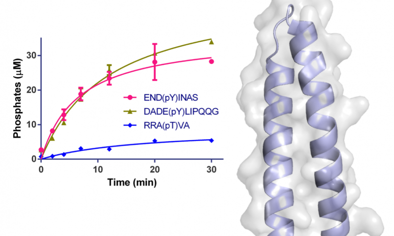 The structure of a pathogenic effector protein from Legionella pneumophila