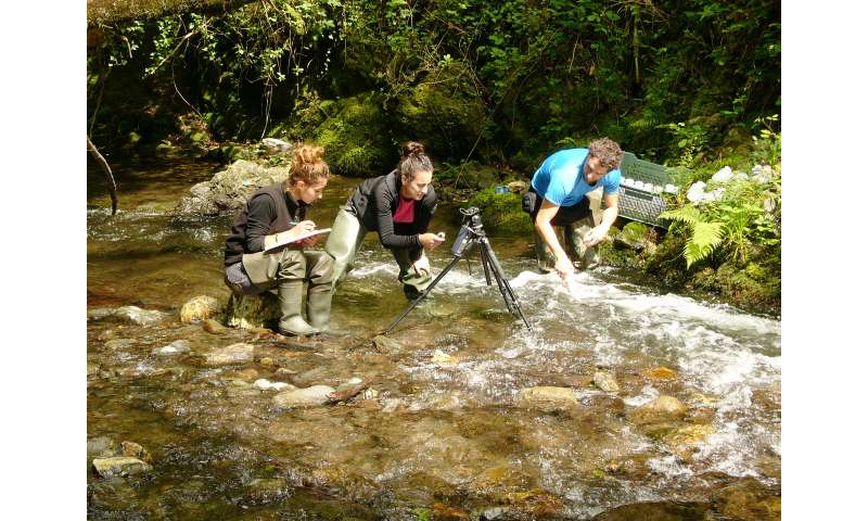 The way rivers function reflects their ecological status and is rarely explored