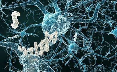 Tiny blood vessels in the brain could be the key in treating vascular dementia