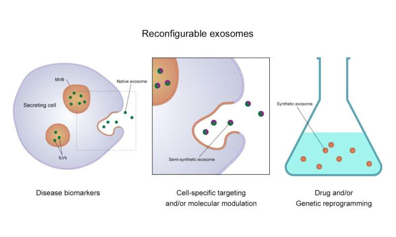 Tiny nanoparticles offer significant potential in detecting/treating disease new review of work on exosomes