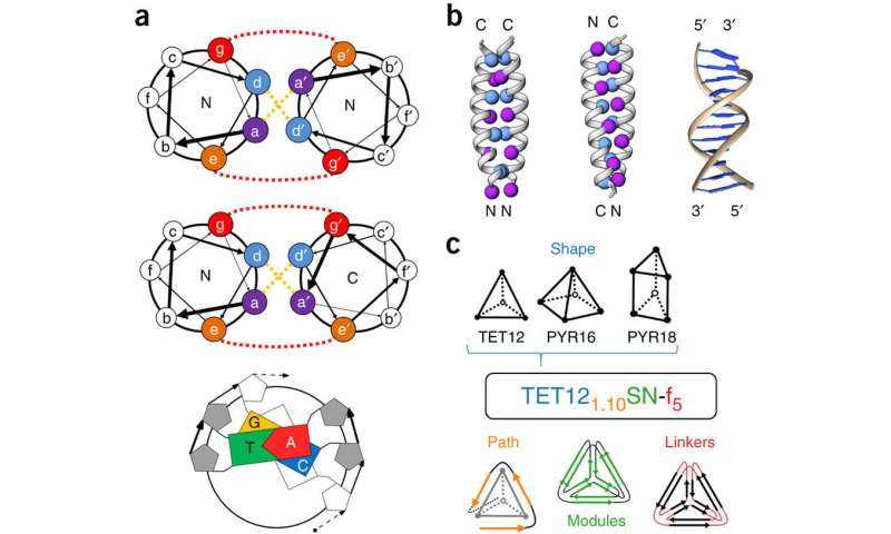 Tiny protein coiled coils that self-assemble into cages