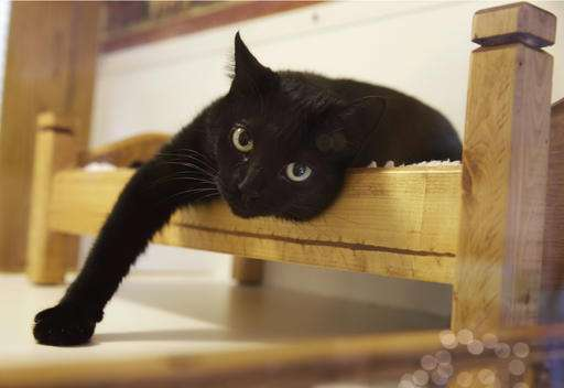 To declaw cats or not? New Jersey could be first with ban