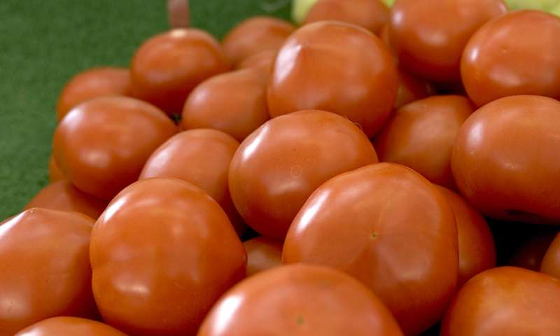 Tomatoes' crystal ball reveals evolutionary secrets