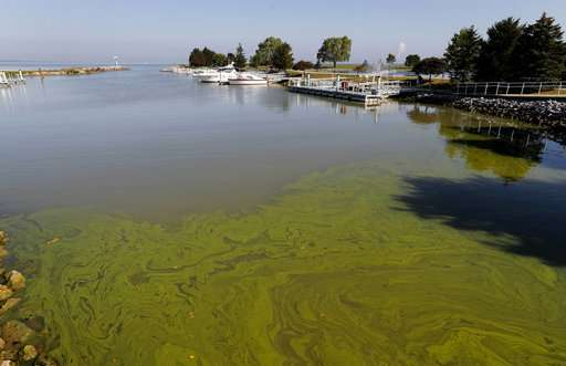 Toxic algae flourishes despite vast sums spent to prevent it