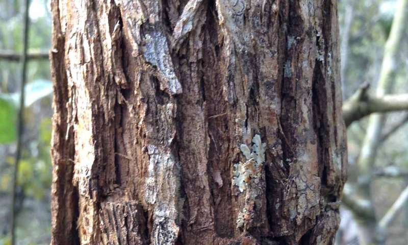 Tree-bark thickness indicates fire-resistance in a hotter future