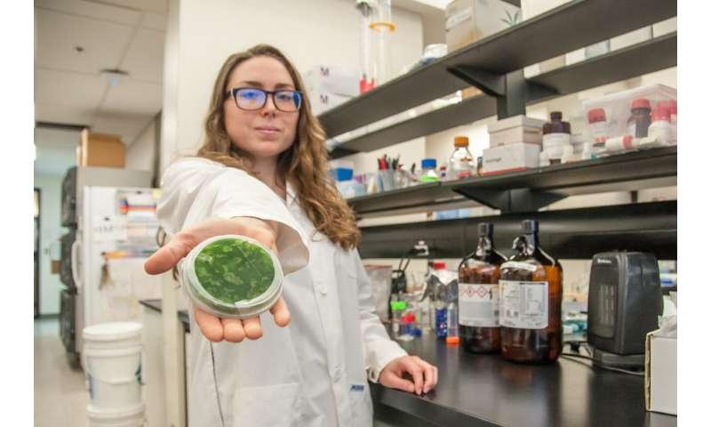 UBC Okanagan researchers discover neurotoxin in Lake Winnipeg